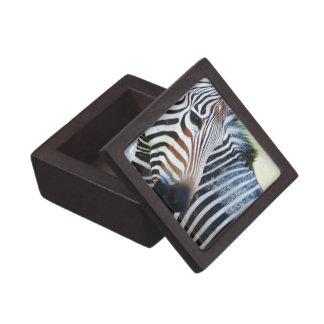 Bold Zebra Premium Gift Box