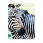 Bold Zebra Premium Magnet Magnets