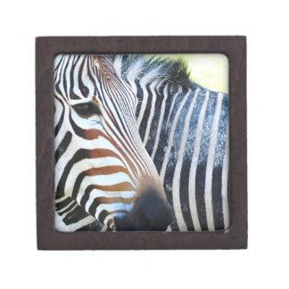Bold Zebra Small Gift Box Premium Jewelry Box