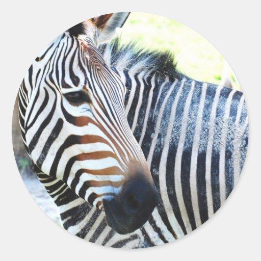 Bold Zebra Stickers