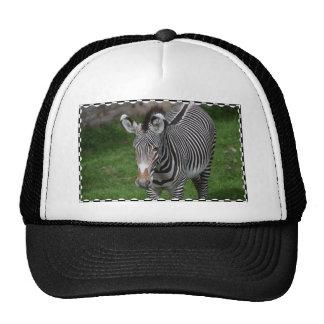 Bold Zebra Stripes Mesh Hat