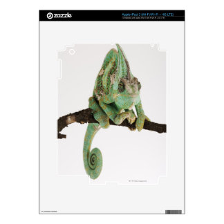 Boldly coloured chameleon with characteristic decals for iPad 3