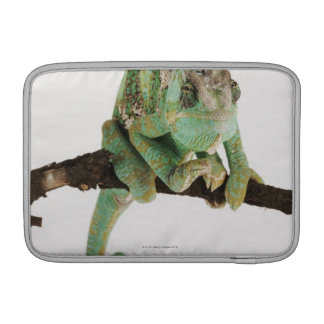 Boldly coloured chameleon with characteristic MacBook sleeves