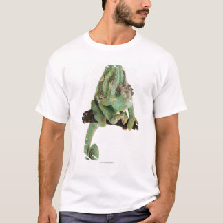 Boldly coloured chameleon with characteristic T-Shirt