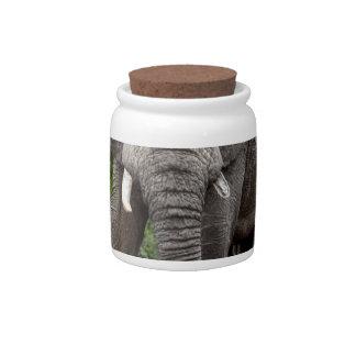 Boletín solitario del elefante africano plato para caramelo