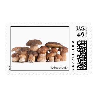 Boletus Edulis mushroom Postage Stamp