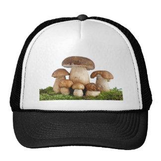 Boletus Edulis mushrooms Hats