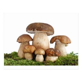 Boletus Edulis mushrooms Postcard
