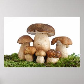 Boletus Edulis mushrooms Poster