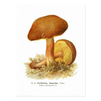 Boletus subtomentosus postcards