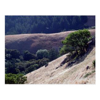Bolinas Ridge, California Postcard
