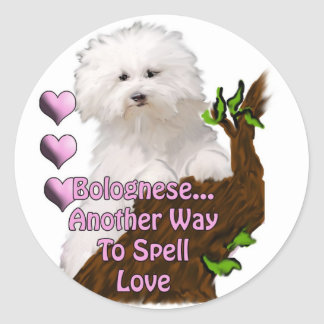Bolognese or Havanese puppy Classic Round Sticker