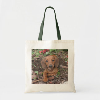 Bolso lindo del perro, dachshund, doxie bolsa