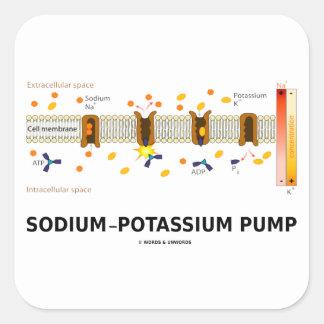 Bomba de sodio-potasio (transporte activo) colcomanias cuadradases