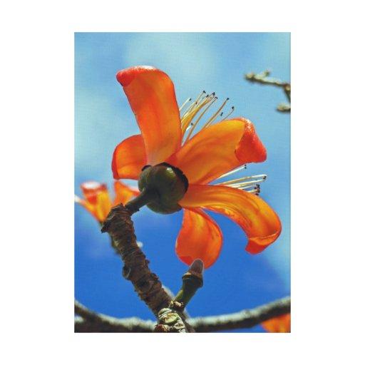Bombax Ceiba Stretched Canvas Prints