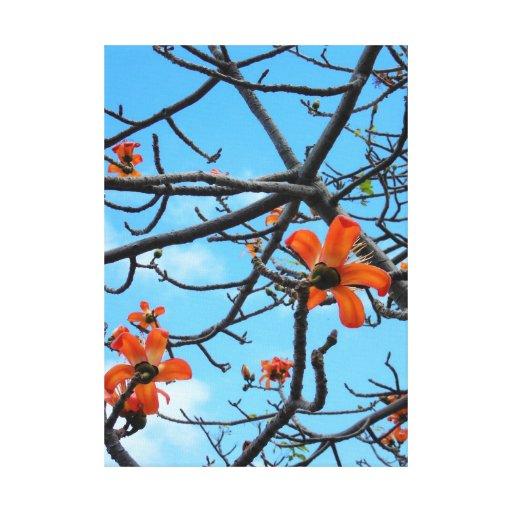 Bombax Ceiba Stretched Canvas Print