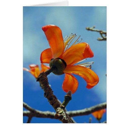 Bombax Ceiba Greeting Cards