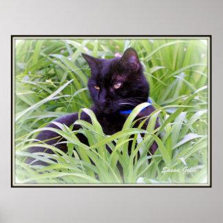 Bombay Black Cat Print Print