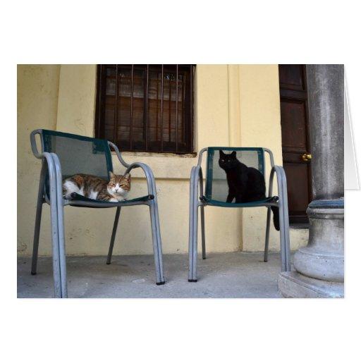 Bombay Cat & Aegen Greeting Card