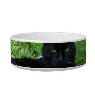 Bombay Cat Lying in Clover Food Bowl Cat Bowl