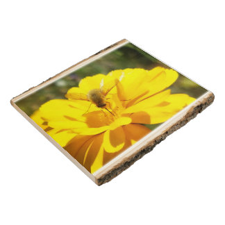 Bombyliida Bee Fly Yellow Flower or your Picture Wood Panel