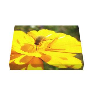 Bombyliida Pollinating Bright Yellow Flower Canvas Print