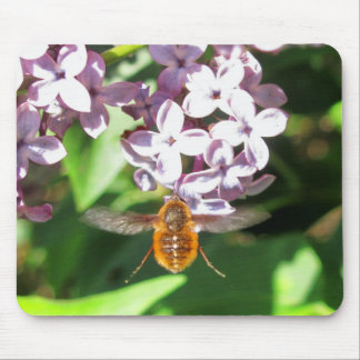 Bombyliidae Bee Fly Pollinating Purple Lilacs Mouse Pad