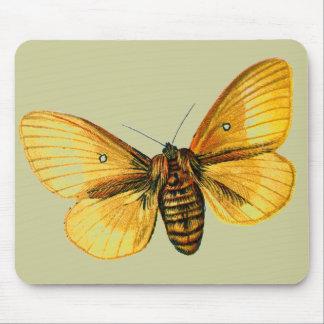 Bombyx quercus female mouse pad