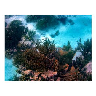 Bonairean Reef Custom Postcard
