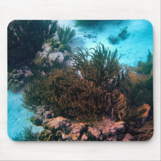 Bonairean Reef Mouse Pad