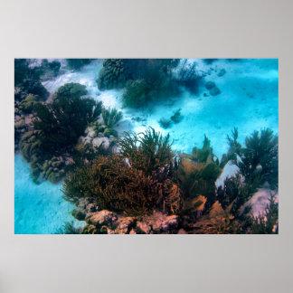 Bonairean Reef Poster