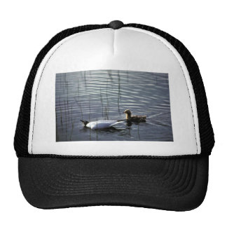 Bonaparte s Gull adult and chick Mesh Hats