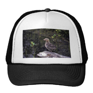 Bonaparte s Gull chick Hats