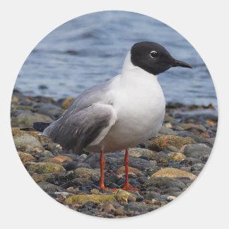 Bonaparte's Gull at the Beach Classic Round Sticker