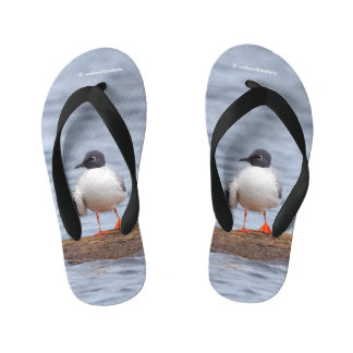 Bonaparte's Gull at the Beach Kid's Flip Flops