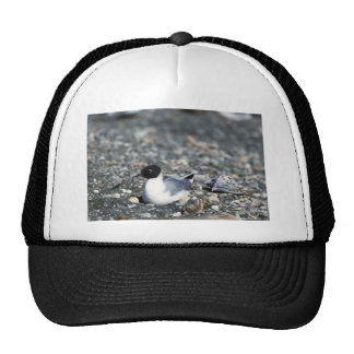 Bonaparte's gull trucker hat