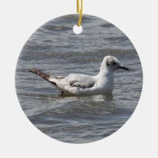Bonaparte's Gull Christmas Tree Ornaments