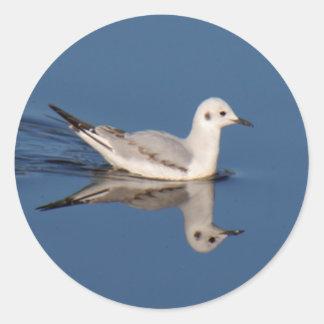 Bonaparte's Gull Stickers
