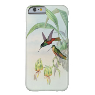 Bonaparte's Star Fronted Hummingbird (coloured lit Barely There iPhone 6 Case