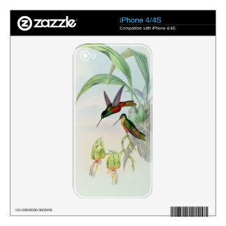 Bonaparte's Star Fronted Hummingbird (coloured lit iPhone 4 Decal