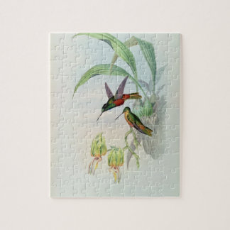 Bonaparte's Star Fronted Hummingbird (coloured lit Jigsaw Puzzle