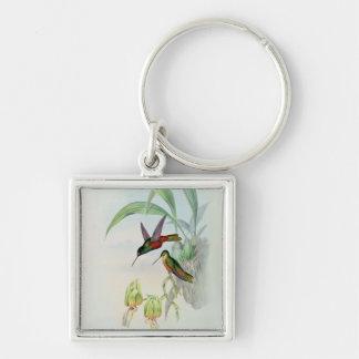 Bonaparte's Star Fronted Hummingbird (coloured lit Keychains
