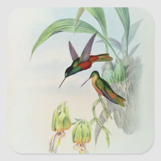 Bonaparte's Star Fronted Hummingbird (coloured lit Square Sticker
