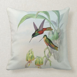 Bonaparte's Star Fronted Hummingbird (coloured lit Throw Pillow