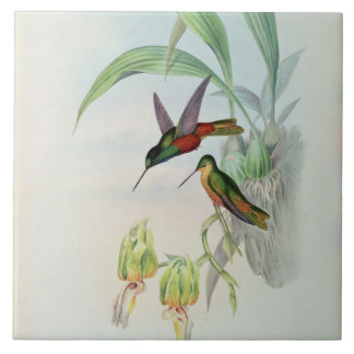 Bonaparte's Star Fronted Hummingbird (coloured lit Tile