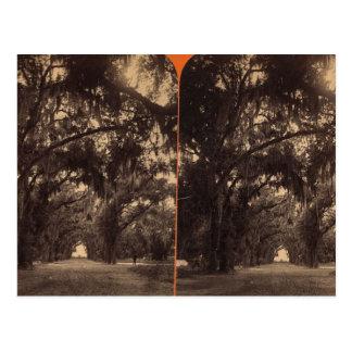 Bonaventure Cemetery, Savannah, Ga c. 1886 Postcard