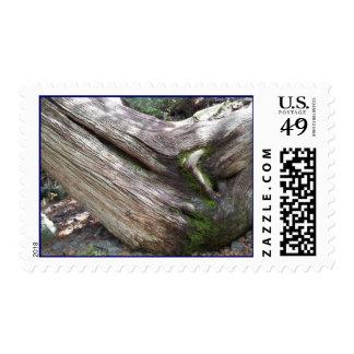 Bond Falls Mossy Old Skewed Pine Tree UP MI Stamps