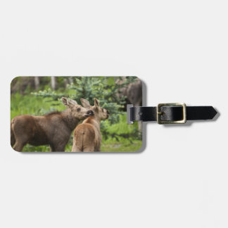 Bonded Moose Calves Bag Tag