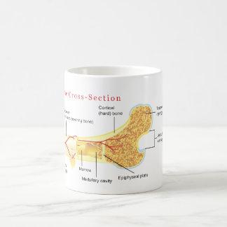Bone Cross Section Diagram Classic White Coffee Mug