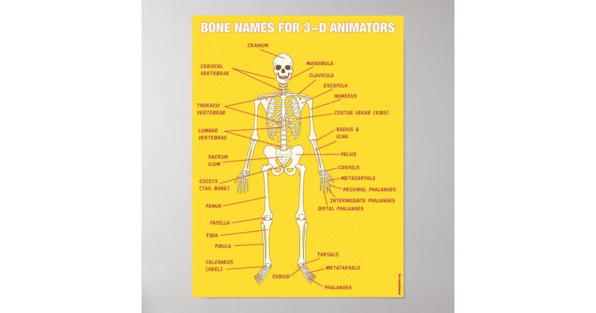 Bone Names For 3 D Animators Poster Zazzle